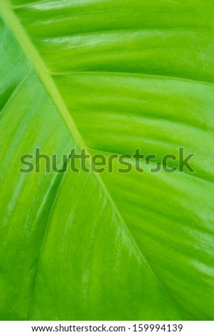 Green leaf texture background, abstract art