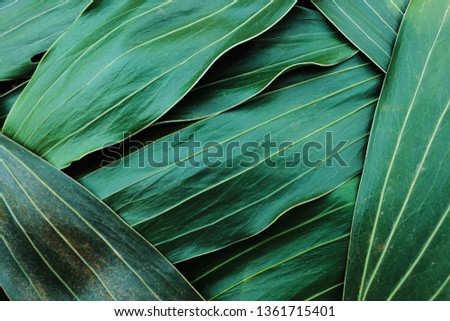 Green leaf texture background,abstract pattern,blur background,copy space,for text,leaf texture studio #1361715401