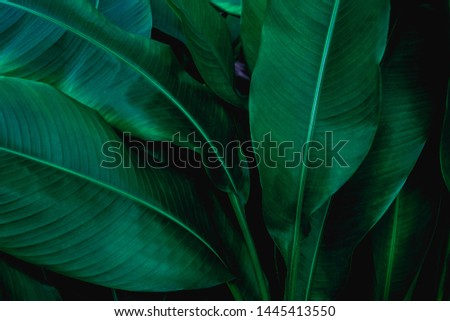 green leaf texture, dark green foliage nature background, tropical leaf #1445413550