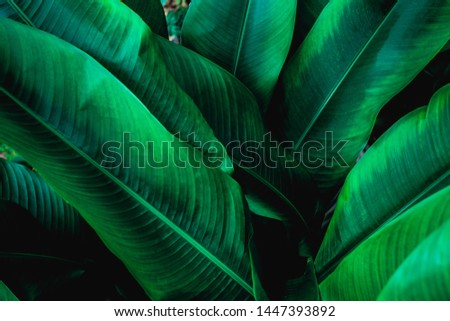 green leaf texture, dark green foliage nature background, tropical leaf #1447393892