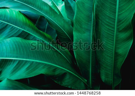 green leaf texture, dark green foliage nature background, tropical leaf #1448768258
