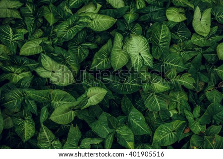 Green leaf texture. Leaf texture background