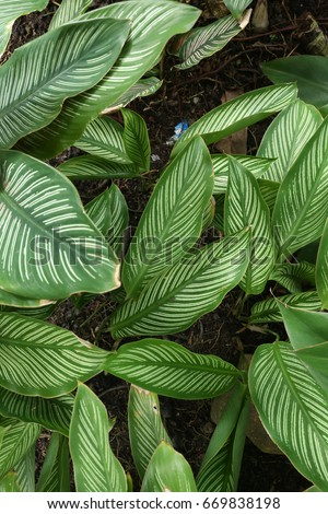 Green leaf texture. Leaf texture background #669838198