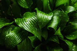 Green leaf texture. Leaf texture background, earth day concept