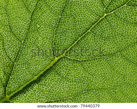 Green leaf texture, macro. Abstract background