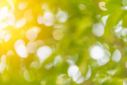 green leaf tree blur bokeh abstract background
