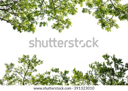 green leaf tree branch isolated on white background