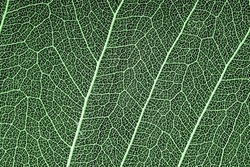green leaf veined macro shot. background for design