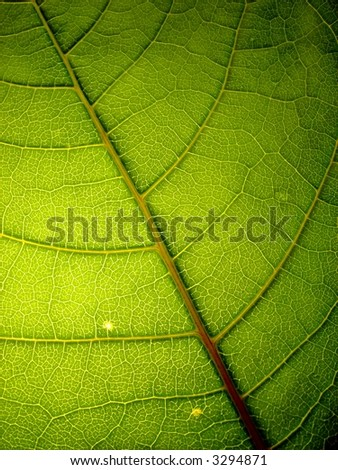 green leaf 4 vertical