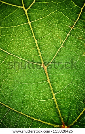 green leaf very close up