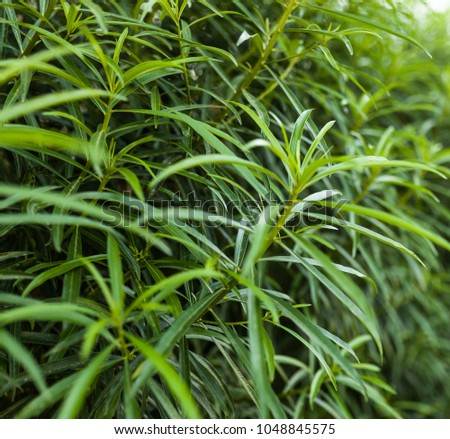 Green leaf wall background horizontal image close up #1048845575