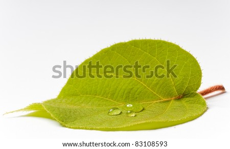 green leaf with big drops on white ground