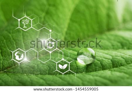 Green leaf with biochemical structure Foto d'archivio ©