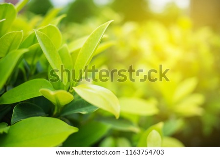 Green leaf with copy space use for design concept takes with soft focus and closeup in nature view on blurred greenery background in the garden. #1163754703