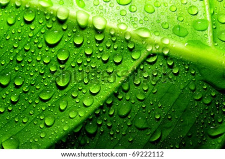Green leaf with drops of water #69222112