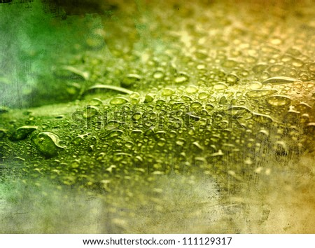 green leaf with drops of water - picture in retro style
