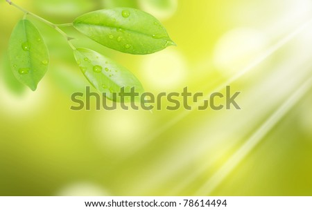 green leaf with drops of water with natural background