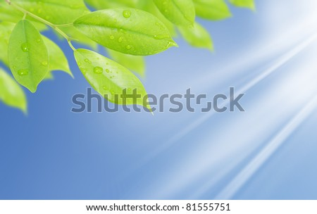 green leaf with drops of water with natural background - stock photo