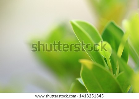 green leaf with ray of lights on blurred greenery background, with copy space. #1413251345