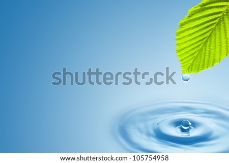 Green leaf with splashing water drops on the blue background.