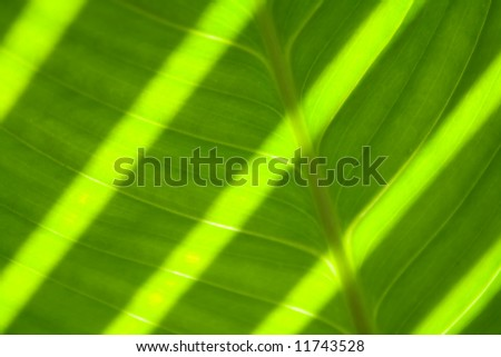 green leaf with sun stripes