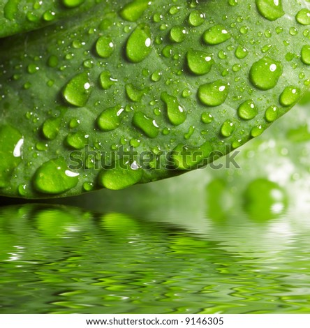 Green leaf with waredrops reflected in th water - stock photo
