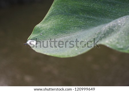 green leaf with water drop water on blue sunny background