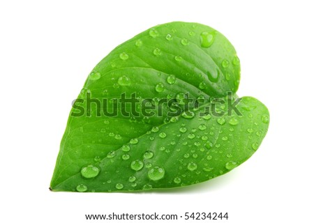 stock photo : Green leaf with water droplets,Closeup.