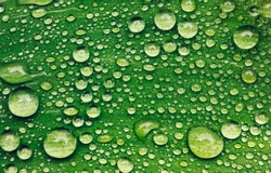 Green leaf with water drops after rain. Close-up background