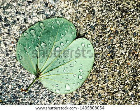 Green leaf with water drops after summer rain leave on small grey and white stones #1435808054