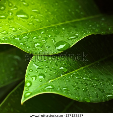Green leaf with water drops for background #137123537