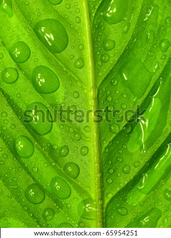 Green leaf with water drops, macro photo