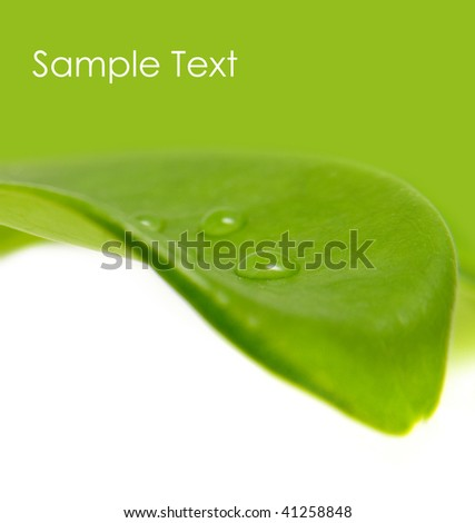 Green leaf with water drops on it (shallow depth of field) - stock photo
