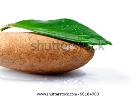 Green leaf with water drops on the stone, isolated on white