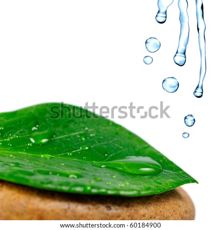 Green leaf with water drops on the stone, isolated on white, close up