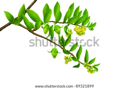 green leaf with yellow flowers