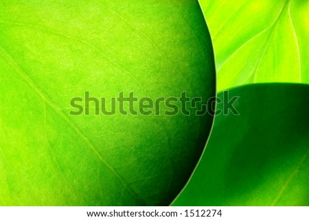 green leafs abstract