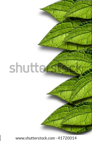 Green leafs isolated on white, Clipping path included.