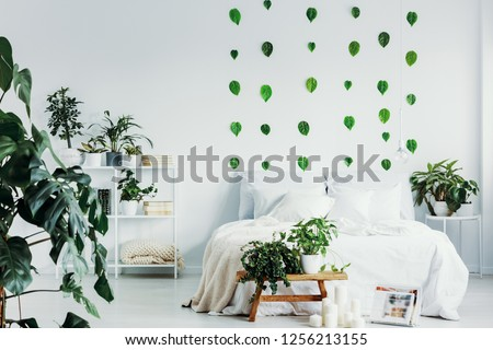 Green leafs on white wall of bright bedroom interior with urban jungle
