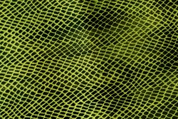 Green leather snake textured background