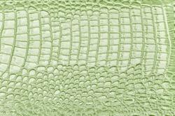 Green leather texture background, closeup. Light olive reptile skin, macro. Nature structure of textile. Luxury crocodile decorative backdrop.