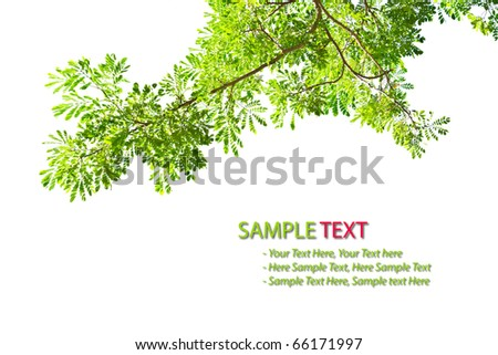green leave frame isolated on white background