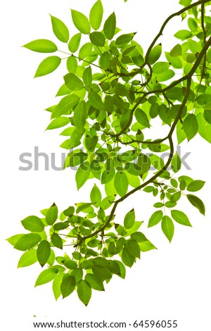 Green leave on white background #64596055