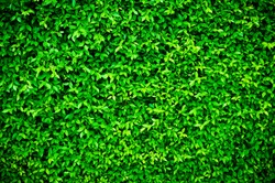 Green leave texture with edit light and colour
