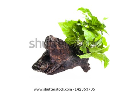 Green leave water plants on small log against white background