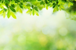 Green leave with green bokeh background