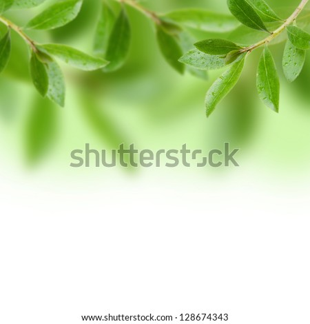 Green leave with white background