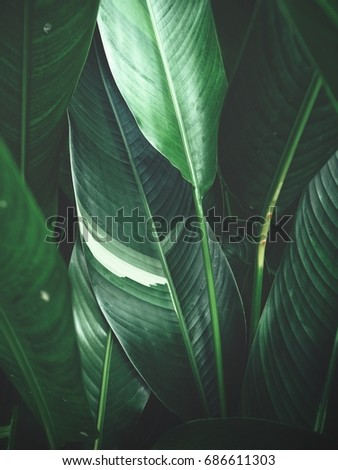 Green leaves #686611303