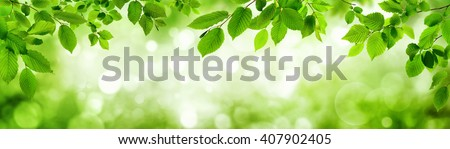 Green leaves and blurred highlights in the background build a natural frame in panorama format #407902405