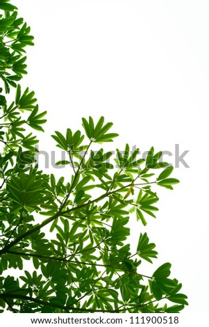 green leaves and branches on white background for abstract texture